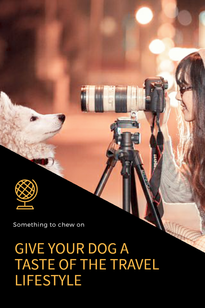 graphic on raodtrip with your dog